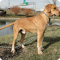 Adopt A Pet :: Todd - Lewisville, IN