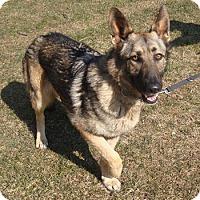 Adopt A Pet :: Sasha - Mt. Airy, MD