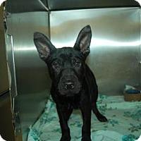 Adopt A Pet :: Garbanzo - Bradenton, FL