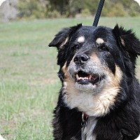 Adopt A Pet :: Luna - Ridgway, CO