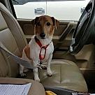 Adopt A Pet :: Bojack