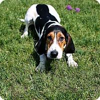 Adopt A Pet :: Jyp - Appleton, WI