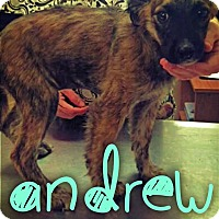 Adopt A Pet :: Andrew - Garden City, MI