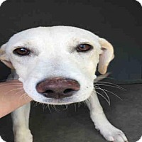 Adopt A Pet :: A087308 - Hanford, CA