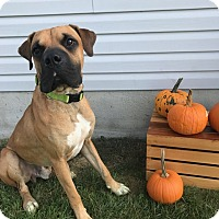 Adopt A Pet :: Hercules - New Oxford, PA