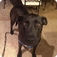 Adopt A Pet :: Cam - Byhalia, MS