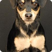 Adopt A Pet :: Lucky Dawg - Newland, NC