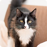 Adopt A Pet :: Ayrton - Fountain Hills, AZ
