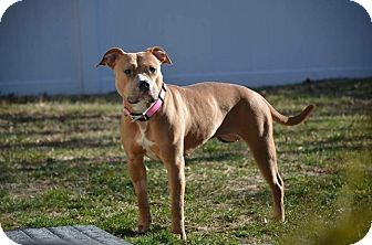 Labrador Retriever Mix Dog for adoption in Brookhaven, New York - Dutchess