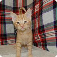 Adopt A Pet :: Durk - South Haven, MI