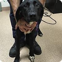 Adopt A Pet :: Faith - Saginaw, MI