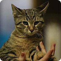 Adopt A Pet :: Alby - Kettering, OH