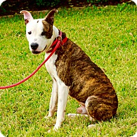 Adopt A Pet :: Obi Wan - Seattle, WA