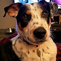 Adopt A Pet :: Noble - Frisco, TX
