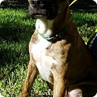 Adopt A Pet :: Tigger - Miami, FL