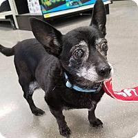 Adopt A Pet :: Norman - Salt Lake City, UT