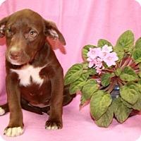 Adopt A Pet :: Reese - Washington, DC