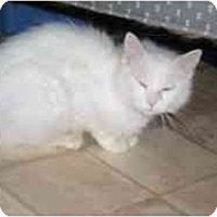 Adopt A Pet :: Sister - Hamburg, NY