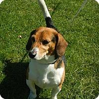 Adopt A Pet :: Mater - Hamilton, ON