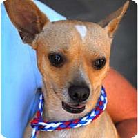 Adopt A Pet :: Nacho - Canoga Park, CA