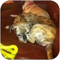Adopt A Pet :: Roxie - Windermere, FL