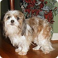 Adopt A Pet :: Suri - Mooy, AL