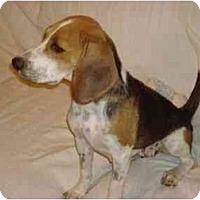 Adopt A Pet :: Maizy - Phoenix, AZ