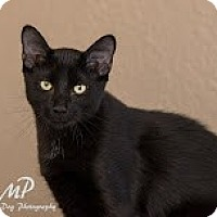 Adopt A Pet :: Rollie - Fountain Hills, AZ