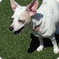 Adopt A Pet :: Maddy - Meridian, ID