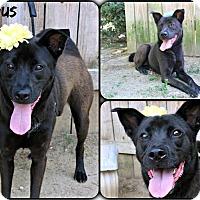 Adopt A Pet :: Venus - Kimberton, PA
