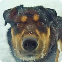 Adopt A Pet :: Chang Lou - Medford, MA