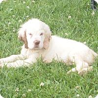 Adopt A Pet :: Smore - Prole, IA