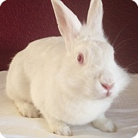 Adopt A Pet :: Merida - Watauga, TX