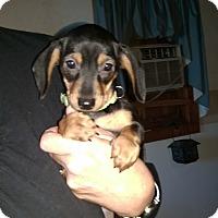 Adopt A Pet :: Katarina - Charlestown, RI