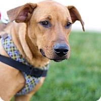 Adopt A Pet :: Mars - Millersville, MD