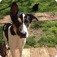 Adopt A Pet :: Sophie - Memphis, TN