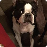 Adopt A Pet :: Clark - Jackson, TN