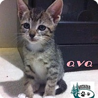 Adopt A Pet :: Ava - Sweet Girl! - Huntsville, ON