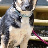 Adopt A Pet :: Leven - Pleasant Plain, OH