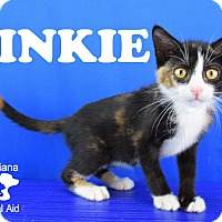 Adopt A Pet :: Pinky - Carencro, LA