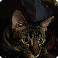 Adopt A Pet :: Spock - Kenosha, WI