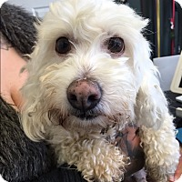 Adopt A Pet :: Posey - Thousand Oaks, CA