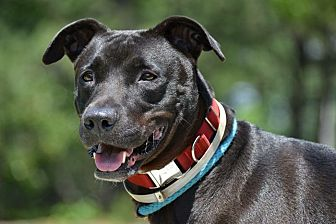 Labrador Retriever Mix Dog for adoption in Brookhaven, New York - Maggie