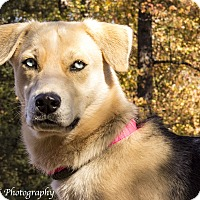 Adopt A Pet :: Athena - Warner Robins, GA