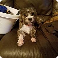 Adopt A Pet :: Daisy Noel Camo in TX - Providence, RI