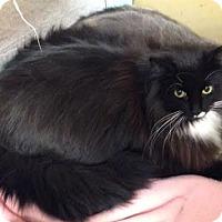 Adopt A Pet :: Mikey - Byron Center, MI