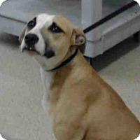 Adopt A Pet :: LEIA - Tavares, FL