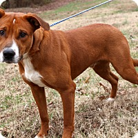 Adopt A Pet :: McGruff~ meet me! - Glastonbury, CT
