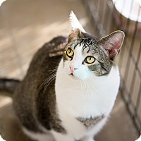 Adopt A Pet :: Alex - Montclair, CA