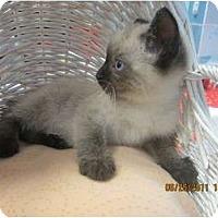 Adopt A Pet :: Goose - Sterling Hgts, MI